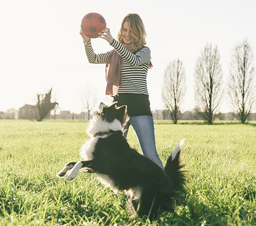 Female Playing With Border Collie