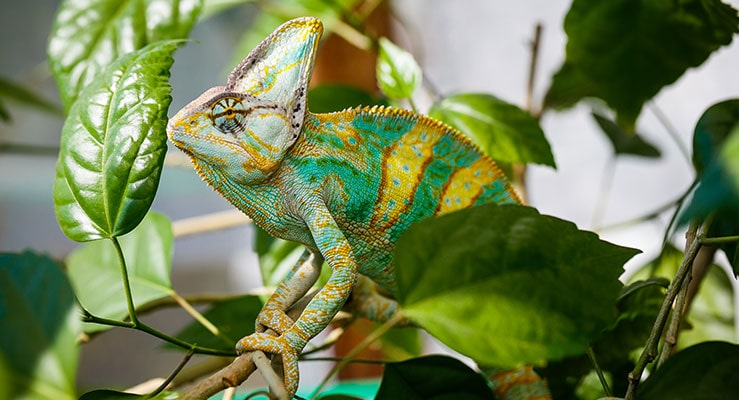 Safe Plants for Reptile Enclosures